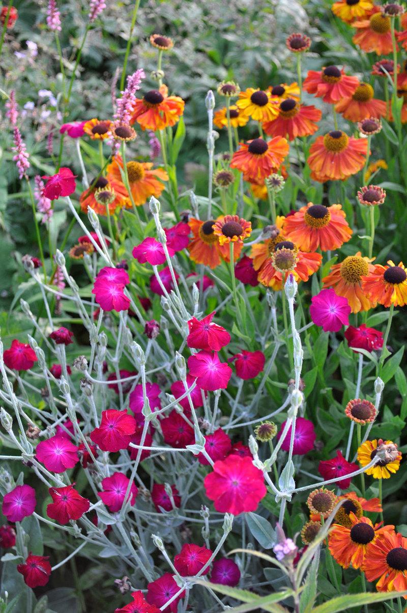 A Guide To Choosing Perennials Claire Austin
