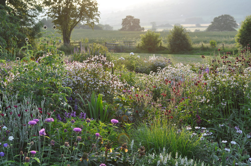 Field open days claire austin - Practical tips for gardening in june ...