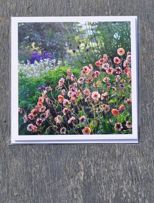 Cards - Geums (pack of 3 cards)