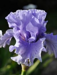 Iris-share-the-spirit3
