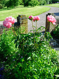 Cone Shaped Peony Support