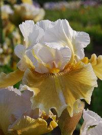 Iris-shurton-inn3