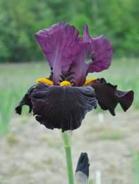 Iris-coalignition1