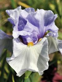 Iris-sing-to-me1