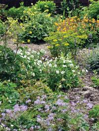 Fr-garden-mid-may-1719