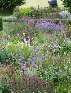 Garden Open Day 22nd July 2020