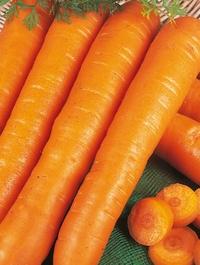Carrot Early Nantes 2