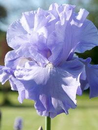 Iris-nestucca-rapids