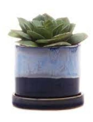 Chive Minute Plant Pot with Saucer