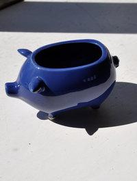 Blue-pig1