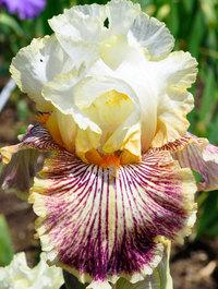 Iris-insaniac