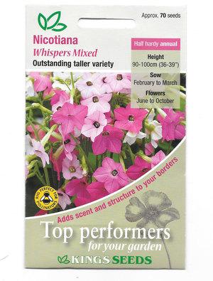 Nicotiana 'Whispers Mixed'