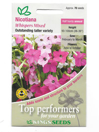 Nicotiana 'Whispers Mixed'