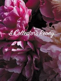 Peony 'Abalone Pearl'