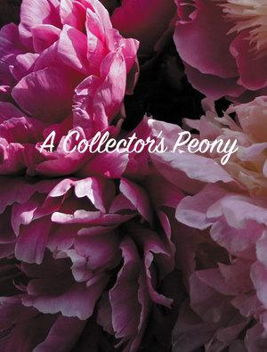Peony 'Blushing Princess'